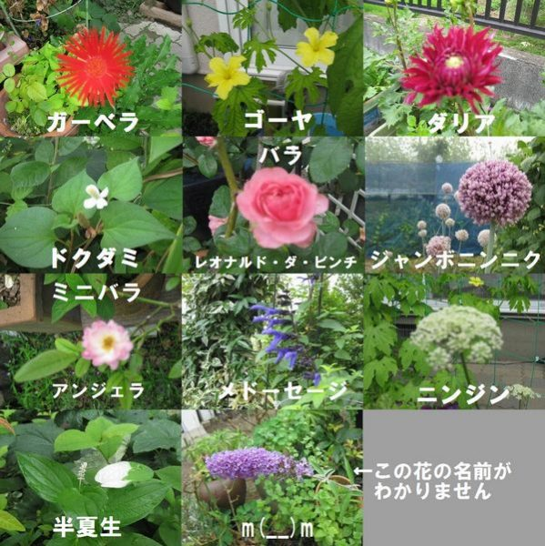 flower_name_a