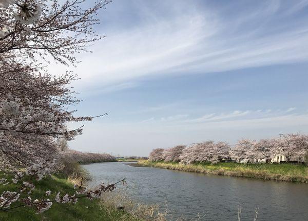 蓮田・元荒川