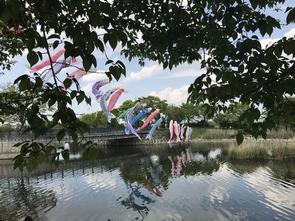 2017鯉のぼり10