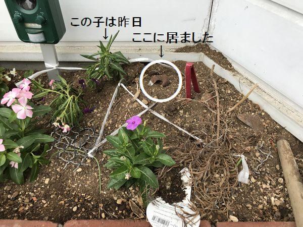 2018・7・6花壇③