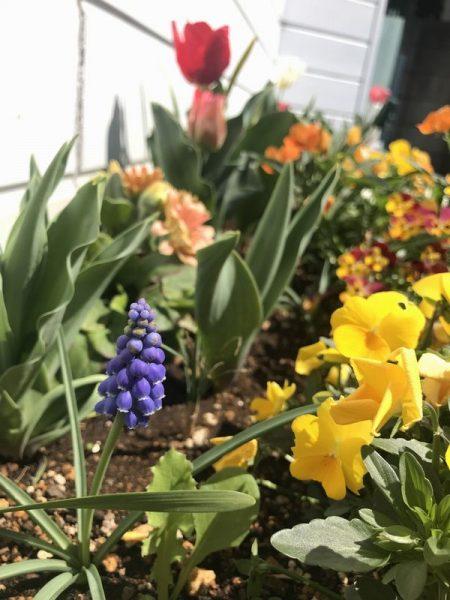 2019・4月花壇①