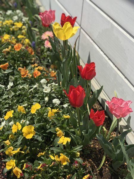 2019年4月13日花壇①