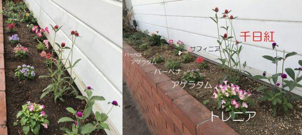 2019年6月4日花壇連結②