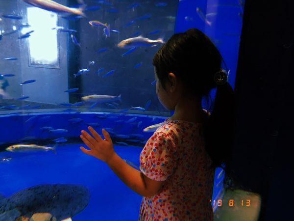 大洗の水族館