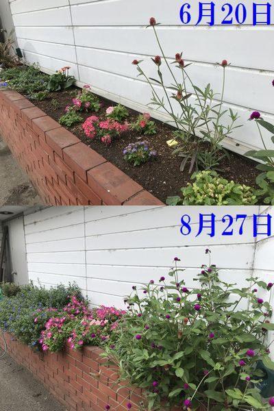 2019・8・27花壇比較