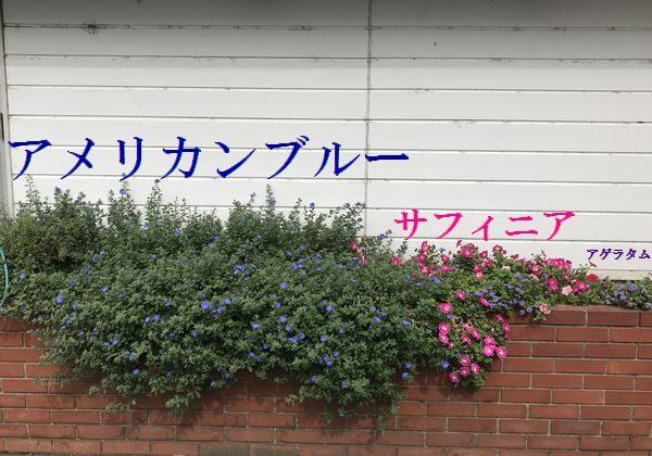 2019・10・3本社花壇