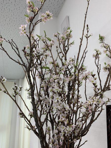 2020・2・26営業所、桜。