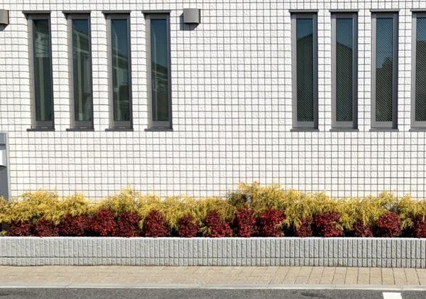2020・2・5営業所花壇・ゴールデンモップ、おたふく南天
