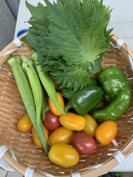 2020夏野菜収穫