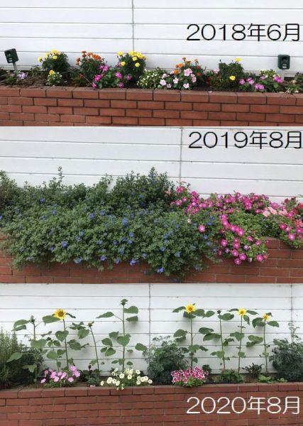 花壇3年比較①