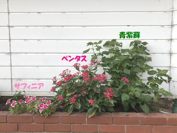 10月6日花壇①