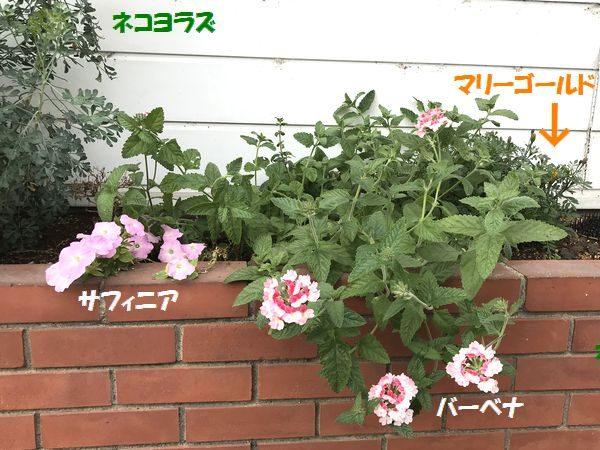 10月6日花壇②