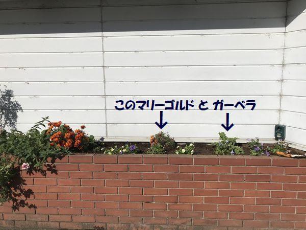 2020・11・16花壇①