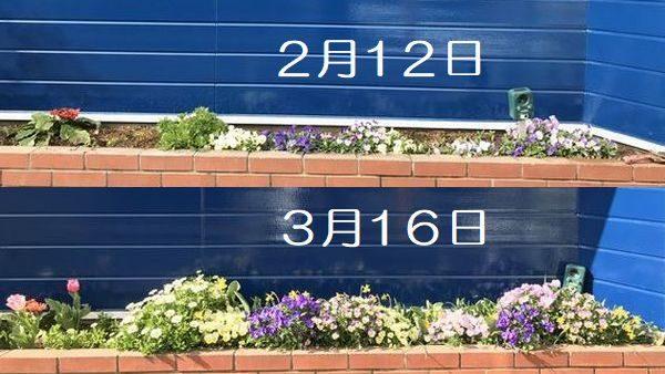 花壇比較2月と3月②