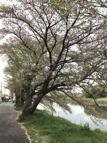 2021観桜会①-1