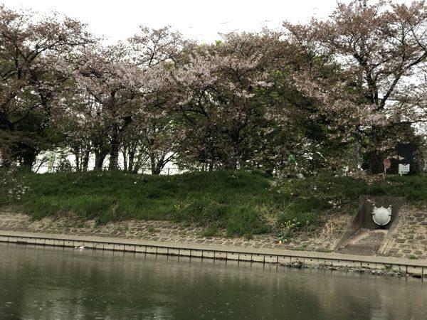 2021観桜会⑪